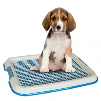 Pet Indoor Toilet Pad
